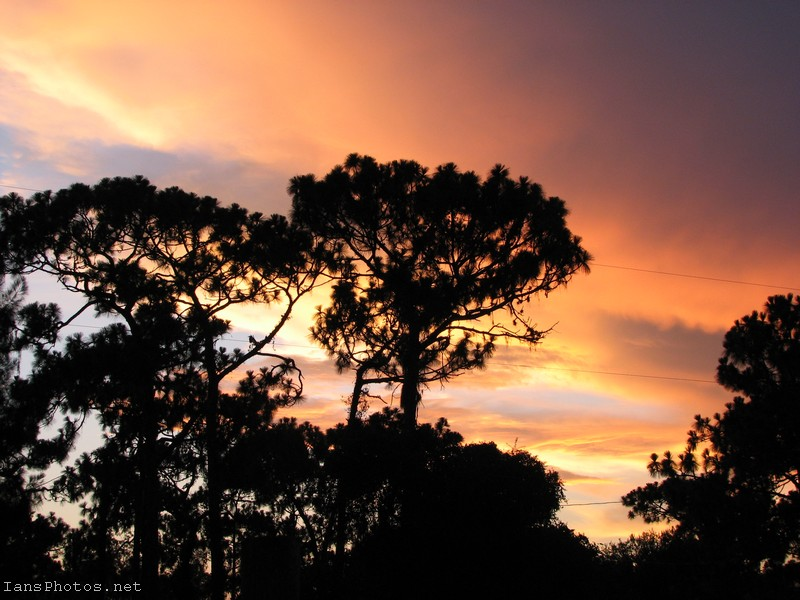 Pine Tree Sunset